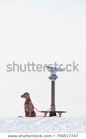 dog being leashed to a telescope stock photo © is2