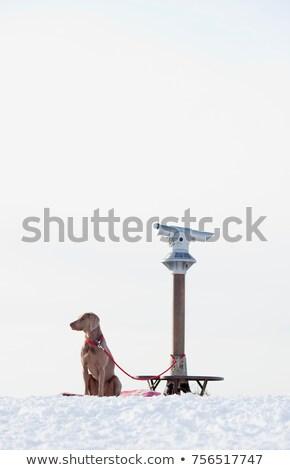 Kutya távcső tél látcső ül vár Stock fotó © IS2
