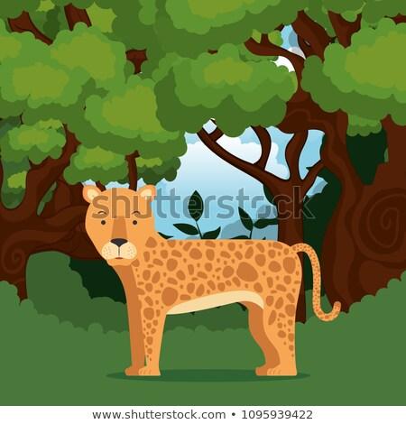 チーター ジャングル シーン 実例 葉 背景 ストックフォト © bluering