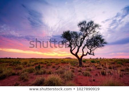 Lone tree in outback Australia Stock photo © lovleah