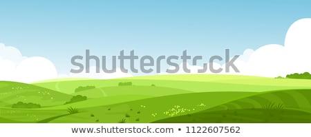 Blue vector grass background  Stock photo © orson