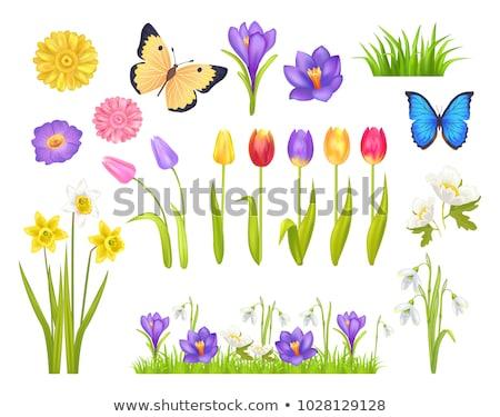 Güzel bahar çiçekleri yalıtılmış çiçek çiçekler bahar Stok fotoğraf © pixelman