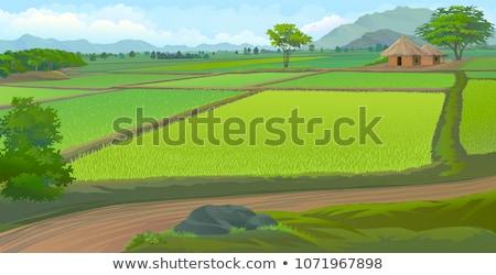 Hut in Pddy Field Stock photo © azamshah72