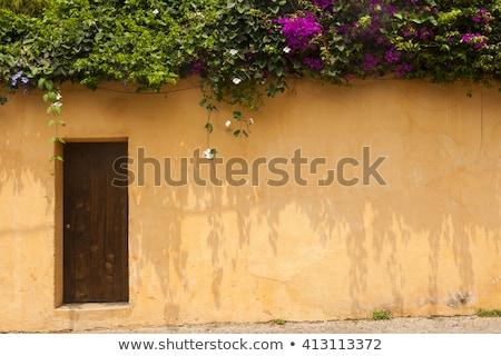 Green Wood Door in Adobe Wall Stock photo © rhamm