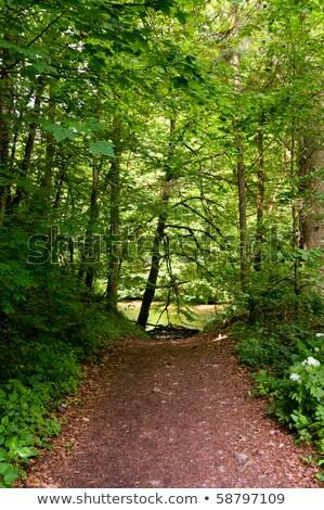 Sentier arbres gravier chemin deux magnifique Photo stock © hraska