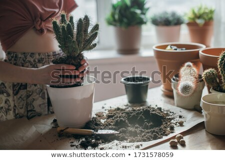 Womanat gardening - repotting Stock photo © armin_burkhardt