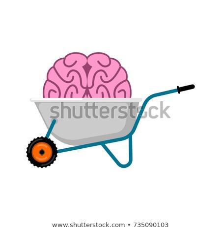 Carriola cervello mente giardino vettore Foto d'archivio © popaukropa