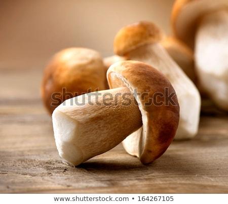 Ehető gomba fából készült illusztráció étel rajz Stock fotó © bluering