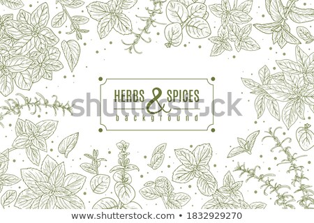 Kabala rozmaring illusztráció növény kert edény Stock fotó © lenm