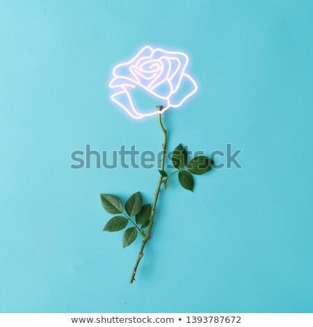 Virág virágzik neonreklám természet promóció levél Stock fotó © Anna_leni