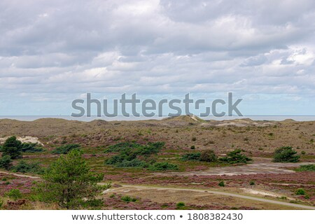 coastline heath Stock photo © smithore