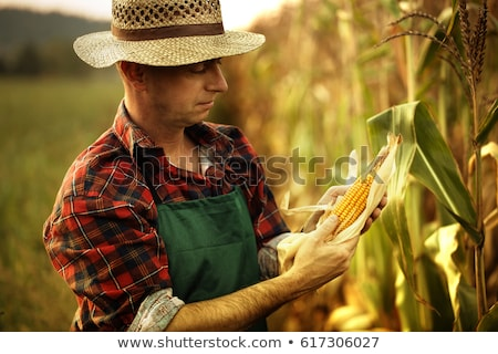 Sweetcorn farmers Stock photo © photography33