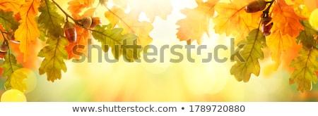Autumn Harvest Stock photo © marilyna