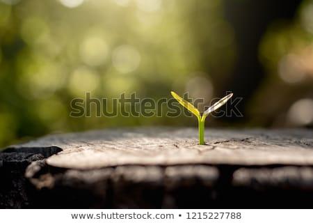 starych · drzewo · wiosną · trawy · lasu · charakter - zdjęcia stock © blamb