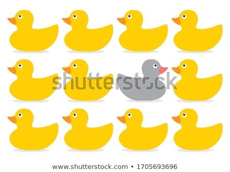 Ordinary duck Stock photo © ivonnewierink