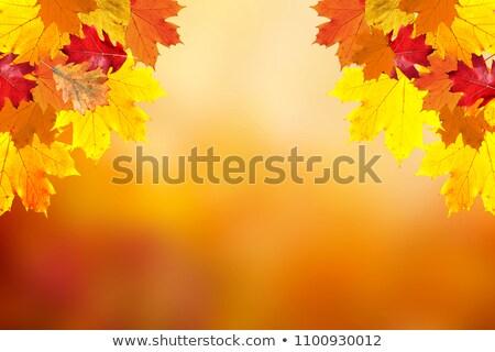 ősz · liget · csodálatos · őszi · arany · levelek - stock fotó © grazvydas