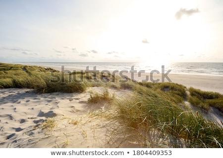 Piasek na plaży trawy ocean wody streszczenie tle Zdjęcia stock © david010167