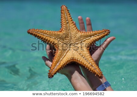 Bella donna starfish indossare bianco bikini Foto d'archivio © iko