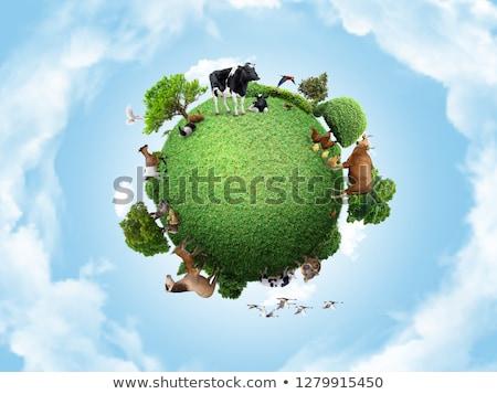 kabarık · civciv · yeşil · ot · Paskalya · bebek · çim - stok fotoğraf © taden