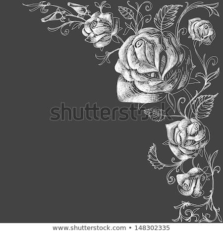 Branco rosa florescer escuro belo isolado Foto stock © taviphoto