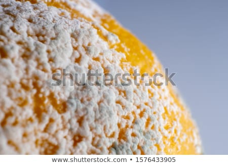 Stale and fresh lemon stock photo © anmalkov
