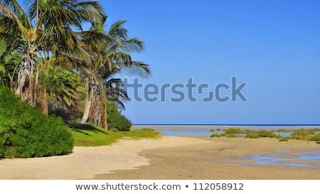 ビーチ スペイン カナリア諸島 水 自然 海 ストックフォト © nito