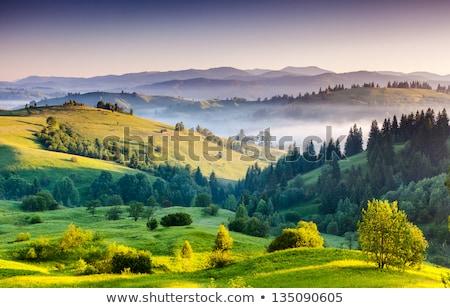 estate · misty · mattina · paese · view · frazione - foto d'archivio © fesus