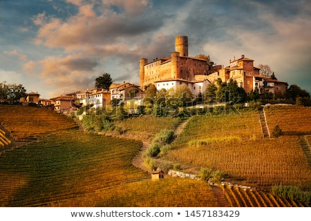 Barolo  Stock photo © LianeM