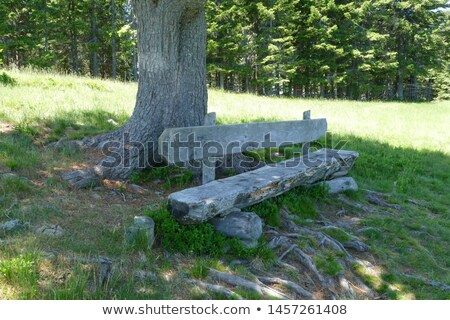 скамейке мнение точки Альпы Top гор Сток-фото © romitasromala