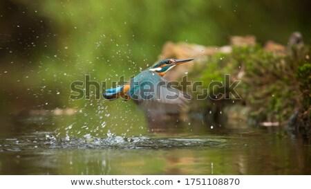 горные лес реке ручей начало запустить Сток-фото © romvo