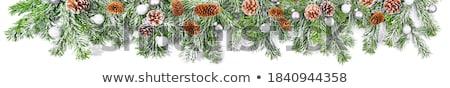 クリスマス 支店 コピースペース 木材 自然 ストックフォト © Valeriy