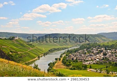 wine harvest vineyard near bernkastel rheinland pfalz germany stock photo © phbcz