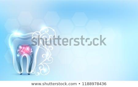 dental · modelo · belo · transparente · dente · rosado - foto stock © tefi