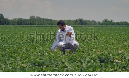 Farmer examining soy bean crop in field Stock photo © simazoran
