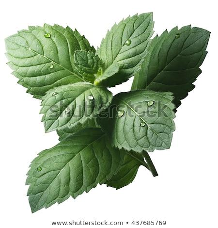 Foto stock: Hortelã-pimenta · folhas · fresco
