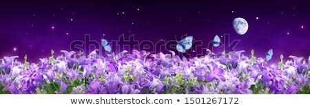 первый · весны · небольшой · синий · цветы - Сток-фото © neirfy