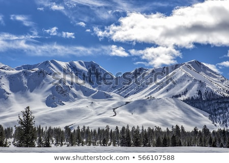 mammoth in the mountains Stock photo © orla