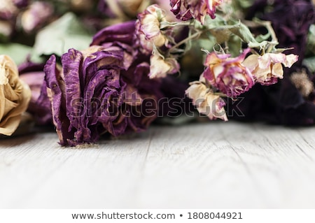 Rose flower on hessian Stock photo © trgowanlock