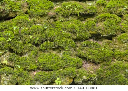 dry moss and clefty stone Stock photo © prill