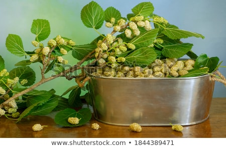 fresh ripe mulberry over white Stock photo © keko64