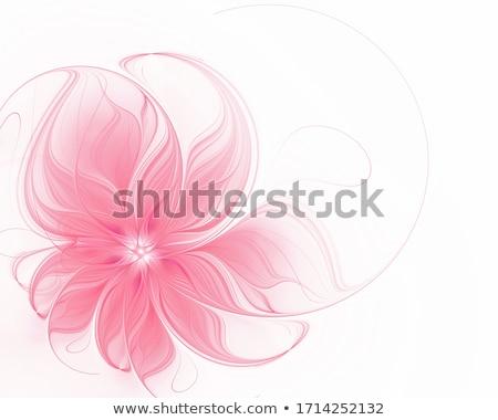 Bellezza floreale rosolare abstract design Foto d'archivio © olgaaltunina