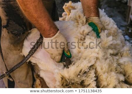 Koszos birka Új-Zéland gyapjú étel fű Stock fotó © Hofmeester