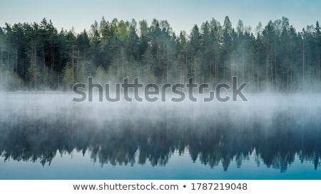 Reflectie bos eiland water boom landschap Stockfoto © tito