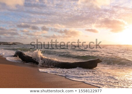 driftwood and waves on a remote beach stock photo © wildnerdpix