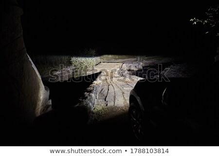 Pojazd most gry rezerwa Botswana Zdjęcia stock © prill