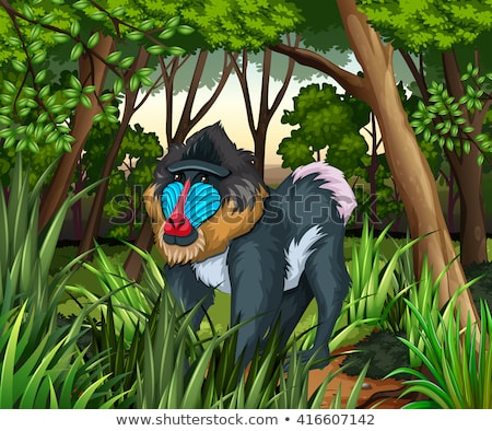 Baboon living in the dark forest Stock photo © bluering