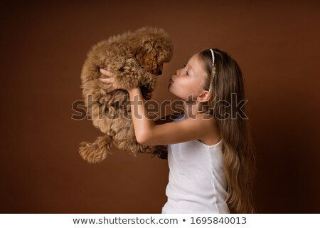 Puppy Poodle in a dark studio stock photo © vauvau