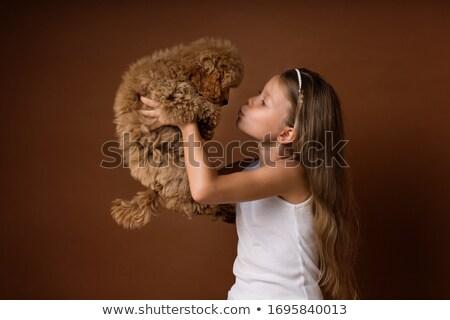 puppy poodle in a dark studio stock photo © vauvau
