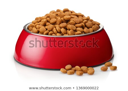 Brown dog with dried food in bowl Stock photo © bluering