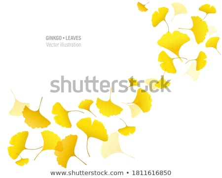 Ginkgo Biloba Border Stock photo © Lightsource